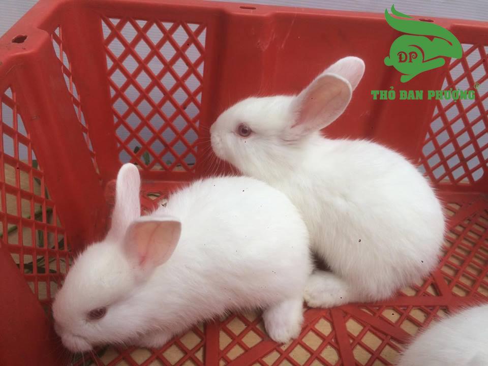 cách chăm sóc thỏ sinh sản.