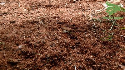 nền lót sinh học trong chăn nuôi thỏ.