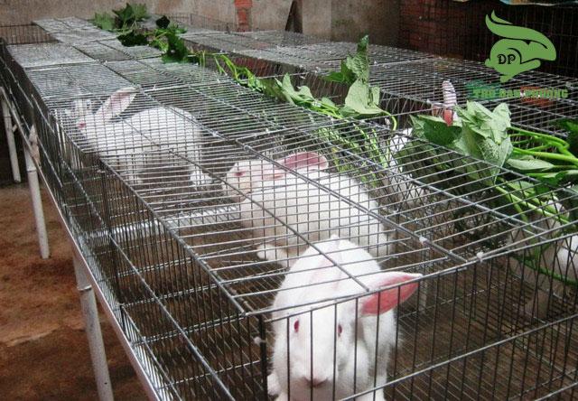 chế độ dinh dưỡng thỏ sinh sản.